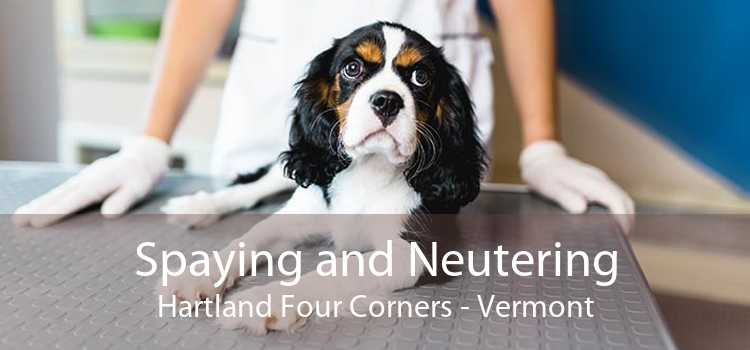 Spaying and Neutering Hartland Four Corners - Vermont