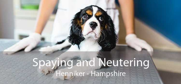 Spaying and Neutering Henniker - Hampshire
