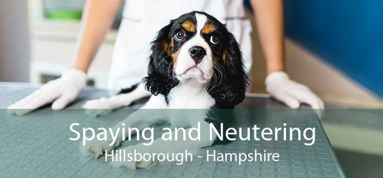 Spaying and Neutering Hillsborough - Hampshire