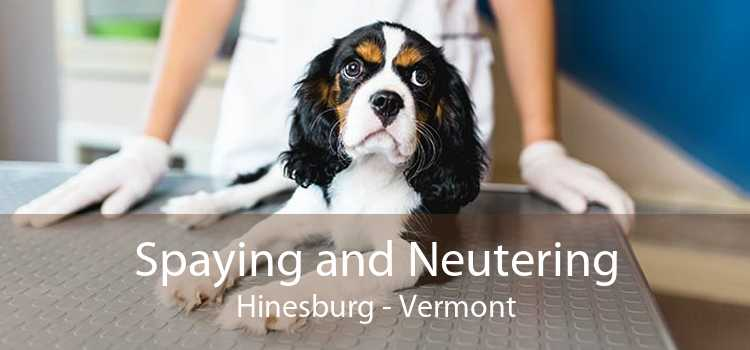 Spaying and Neutering Hinesburg - Vermont