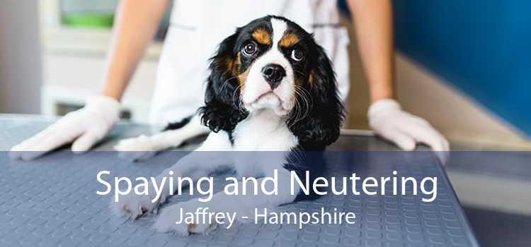 Spaying and Neutering Jaffrey - Hampshire
