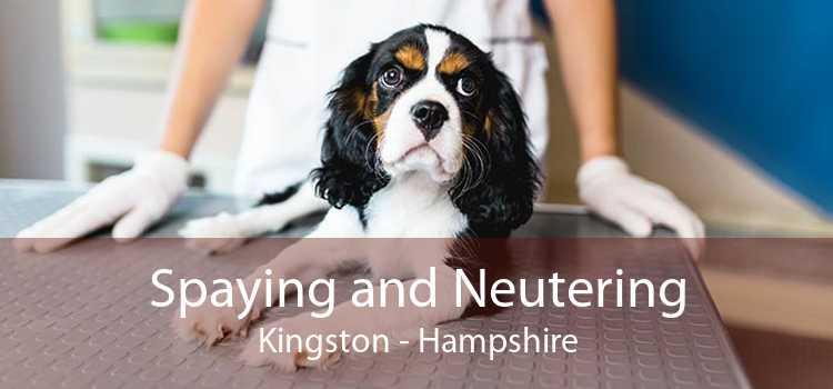 Spaying and Neutering Kingston - Hampshire