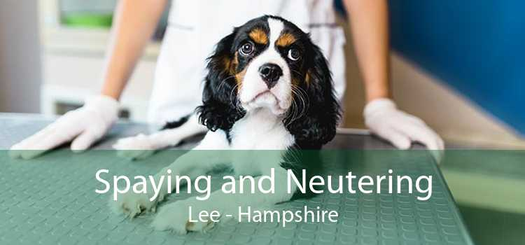 Spaying and Neutering Lee - Hampshire
