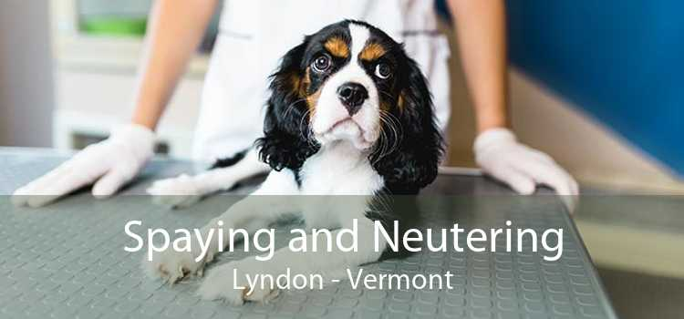 Spaying and Neutering Lyndon - Vermont