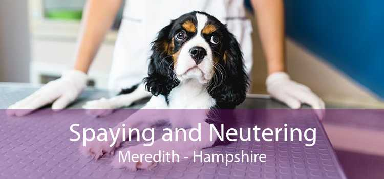 Spaying and Neutering Meredith - Hampshire
