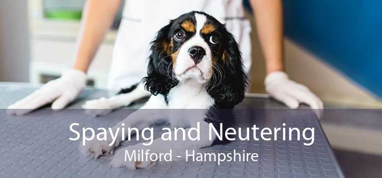 Spaying and Neutering Milford - Hampshire