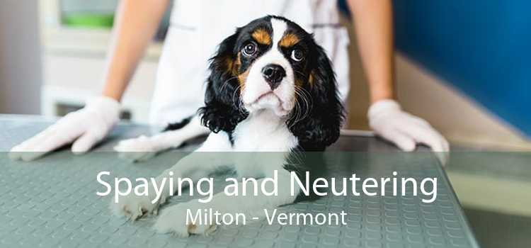 Spaying and Neutering Milton - Vermont