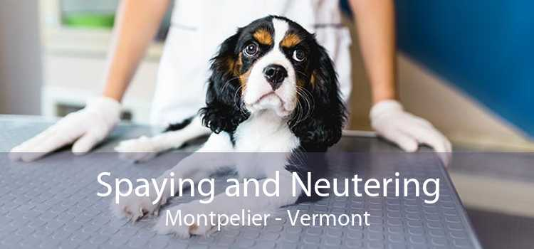 Spaying and Neutering Montpelier - Vermont