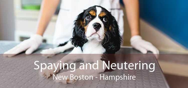 Spaying and Neutering New Boston - Hampshire