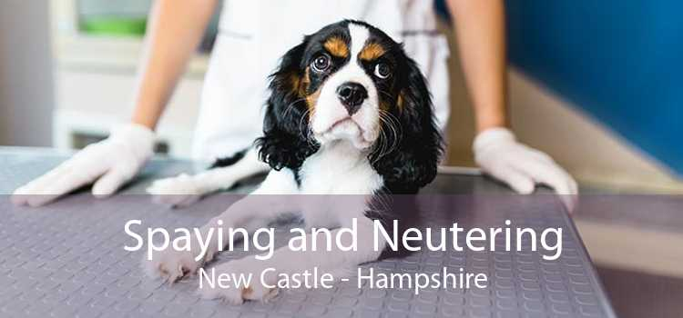 Spaying and Neutering New Castle - Hampshire