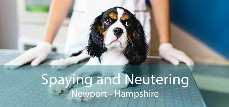 Spaying and Neutering Newport - Hampshire
