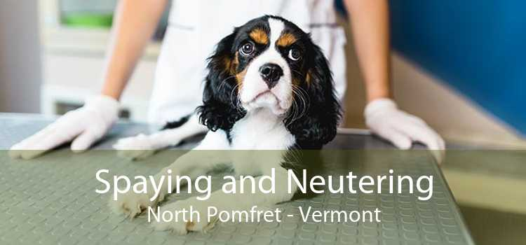 Spaying and Neutering North Pomfret - Vermont