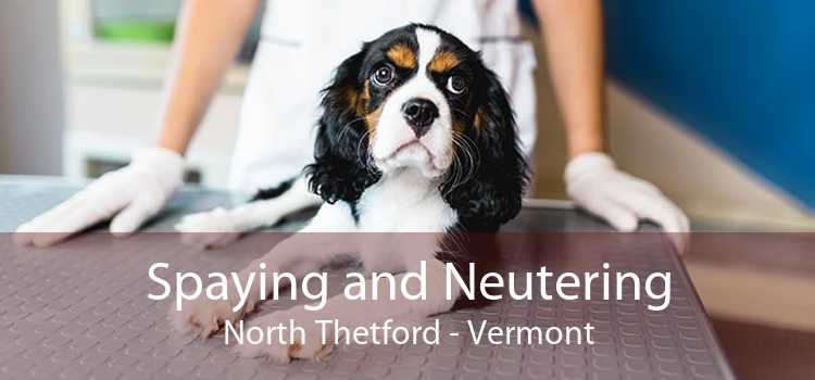 Spaying and Neutering North Thetford - Vermont