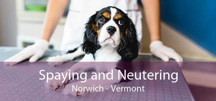 Spaying and Neutering Norwich - Vermont