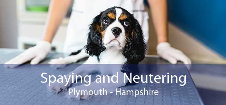 Spaying and Neutering Plymouth - Hampshire