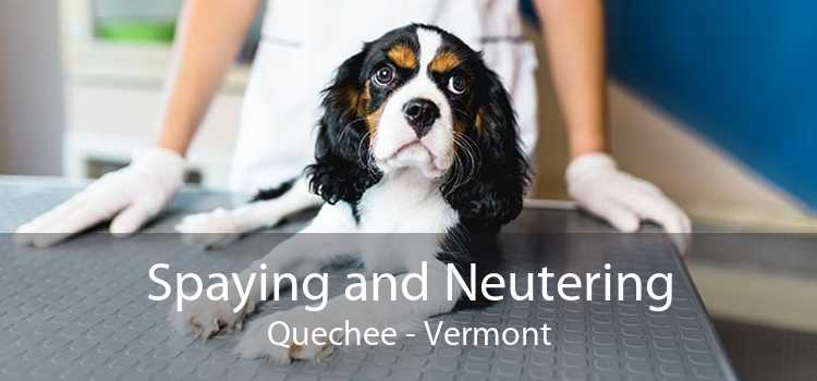 Spaying and Neutering Quechee - Vermont