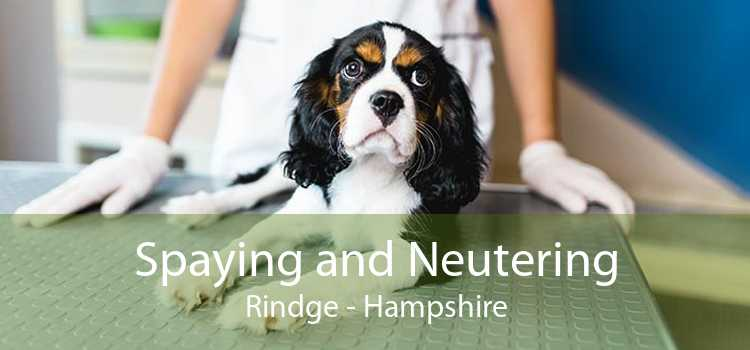 Spaying and Neutering Rindge - Hampshire