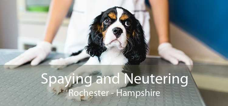 Spaying and Neutering Rochester - Hampshire