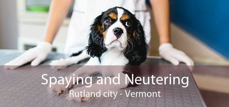 Spaying and Neutering Rutland city - Vermont