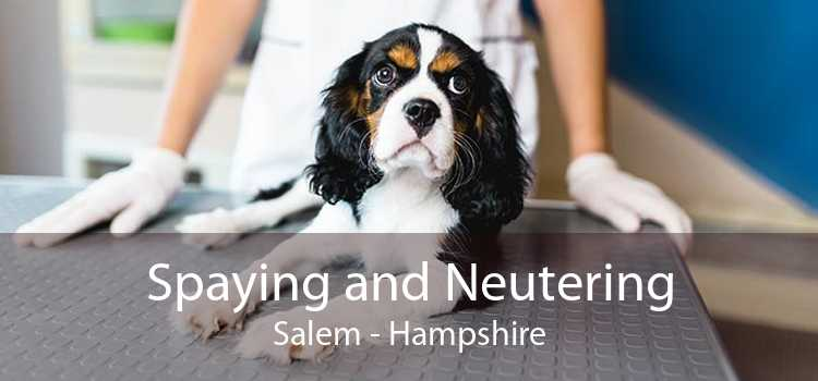 Spaying and Neutering Salem - Hampshire