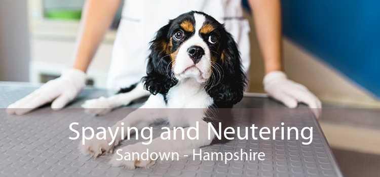 Spaying and Neutering Sandown - Hampshire