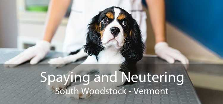 Spaying and Neutering South Woodstock - Vermont