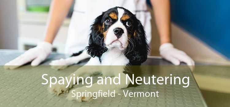 Spaying and Neutering Springfield - Vermont