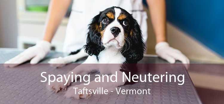 Spaying and Neutering Taftsville - Vermont