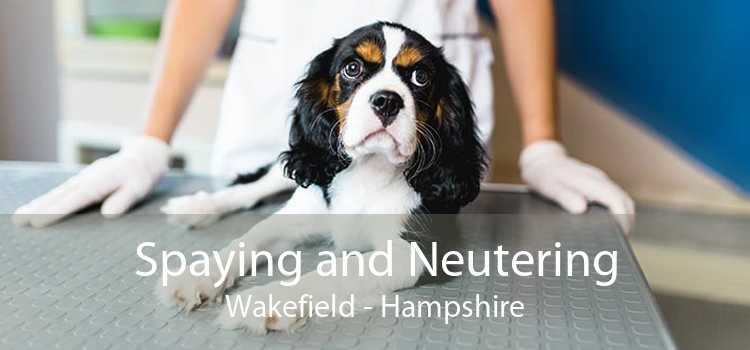 Spaying and Neutering Wakefield - Hampshire