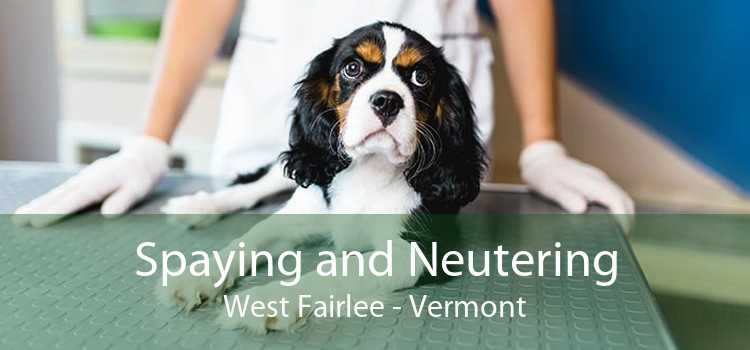Spaying and Neutering West Fairlee - Vermont