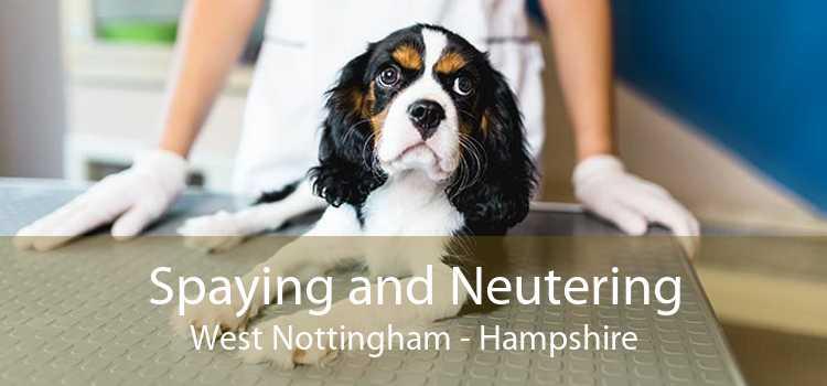 Spaying and Neutering West Nottingham - Hampshire