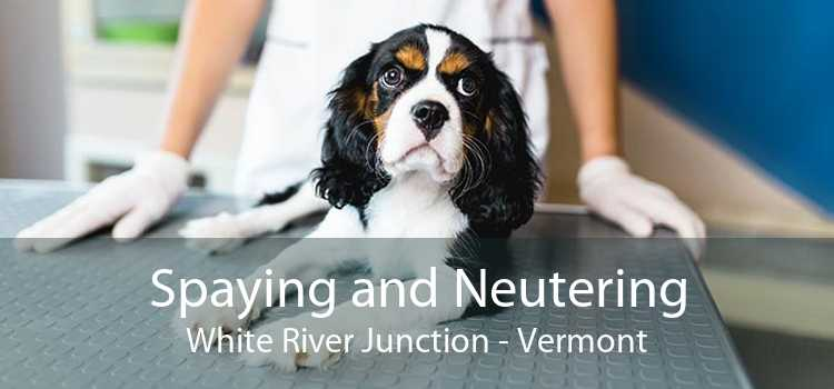 Spaying and Neutering White River Junction - Vermont