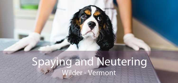 Spaying and Neutering Wilder - Vermont