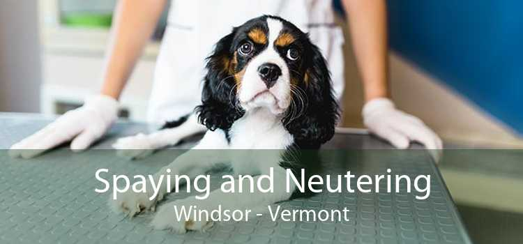 Spaying and Neutering Windsor - Vermont
