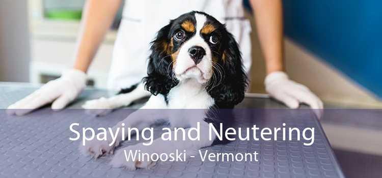 Spaying and Neutering Winooski - Vermont