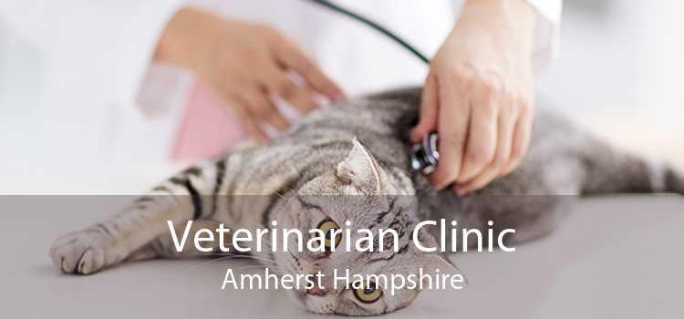 Veterinarian Clinic Amherst Hampshire