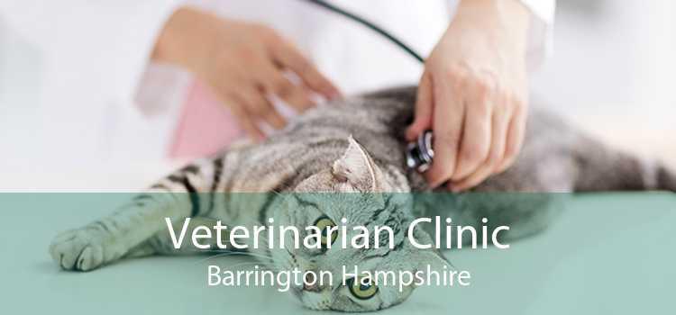 Veterinarian Clinic Barrington Hampshire
