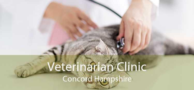 Veterinarian Clinic Concord Hampshire