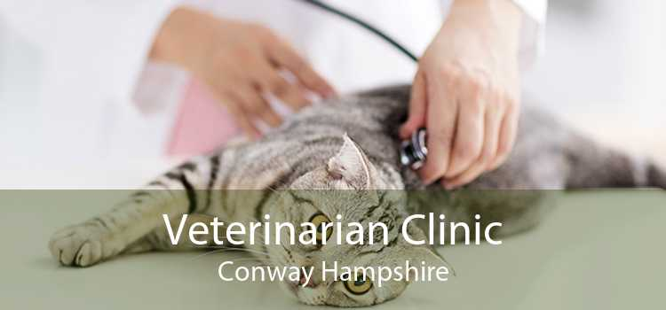 Veterinarian Clinic Conway Hampshire