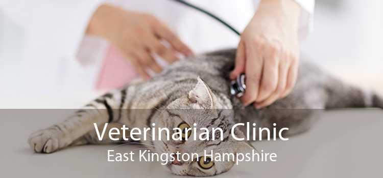 Veterinarian Clinic East Kingston Hampshire