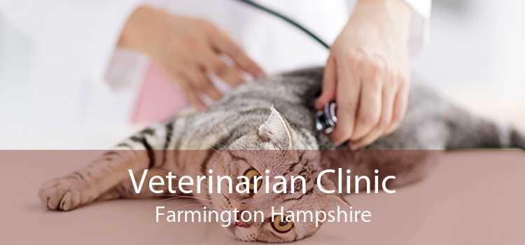 Veterinarian Clinic Farmington Hampshire