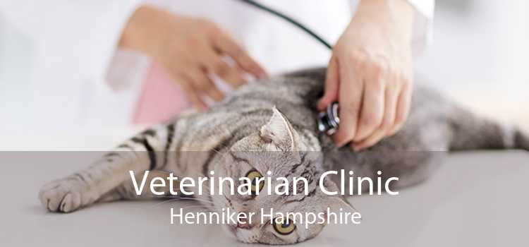 Veterinarian Clinic Henniker Hampshire