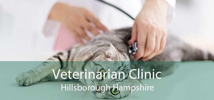 Veterinarian Clinic Hillsborough Hampshire