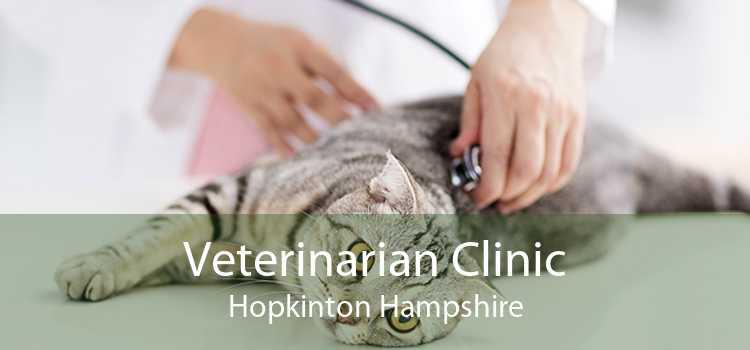 Veterinarian Clinic Hopkinton Hampshire