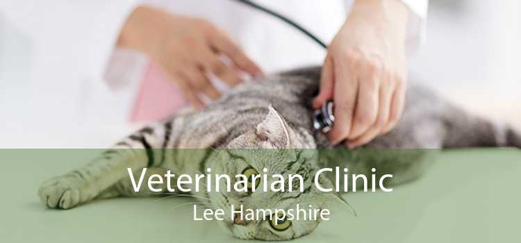 Veterinarian Clinic Lee Hampshire