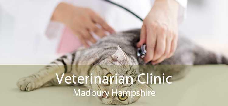 Veterinarian Clinic Madbury Hampshire