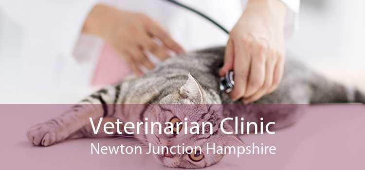 Veterinarian Clinic Newton Junction Hampshire