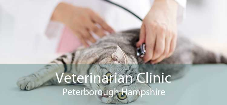 Veterinarian Clinic Peterborough Hampshire
