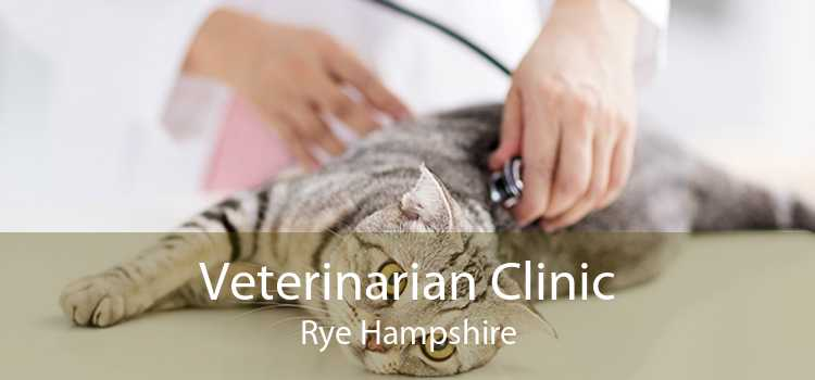 Veterinarian Clinic Rye Hampshire