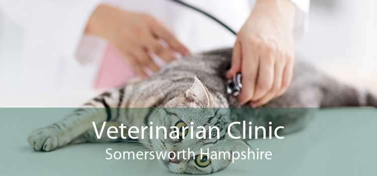 Veterinarian Clinic Somersworth Hampshire
